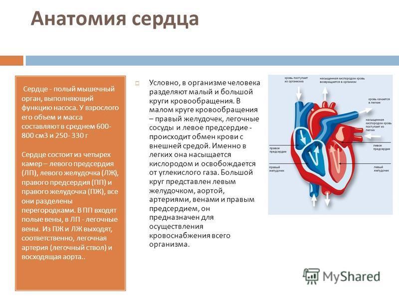 Анатомия сердца Сердце - полый мышечный орган, выполняющий функцию насоса. У взрослого его объем и масса составляют в среднем 600- 800 см 3 и 250- 330 г Сердце состоит из четырех камер – левого предсердия (ЛП), левого желудочка (ЛЖ), правого предсерд