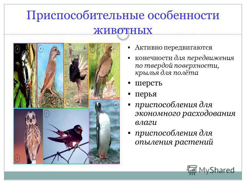 Приспособительные особенности животных Активно передвигаются конечности для передвижения по твердой поверхности, крылья для полёта шерсть перья приспособления для экономного расходования влаги приспособления для опыления растений