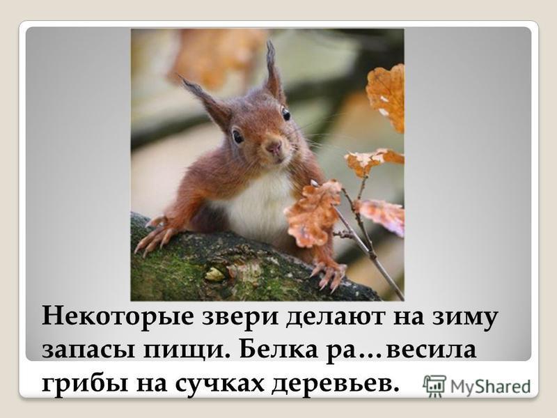 Некоторые звери делают на зиму запасы пищи. Белка ра…весила грибы на сучках деревьев.