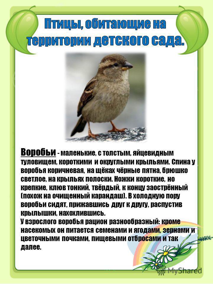 Воробьи - маленькие, с толстым, яйцевидным туловищем, короткими и округлыми крыльями. Спина у воробья коричневая, на щёках чёрные пятна, брюшко светлое, на крыльях полоски. Ножки короткие, но крепкие, клюв тонкий, твёрдый, к концу заострённый (похож