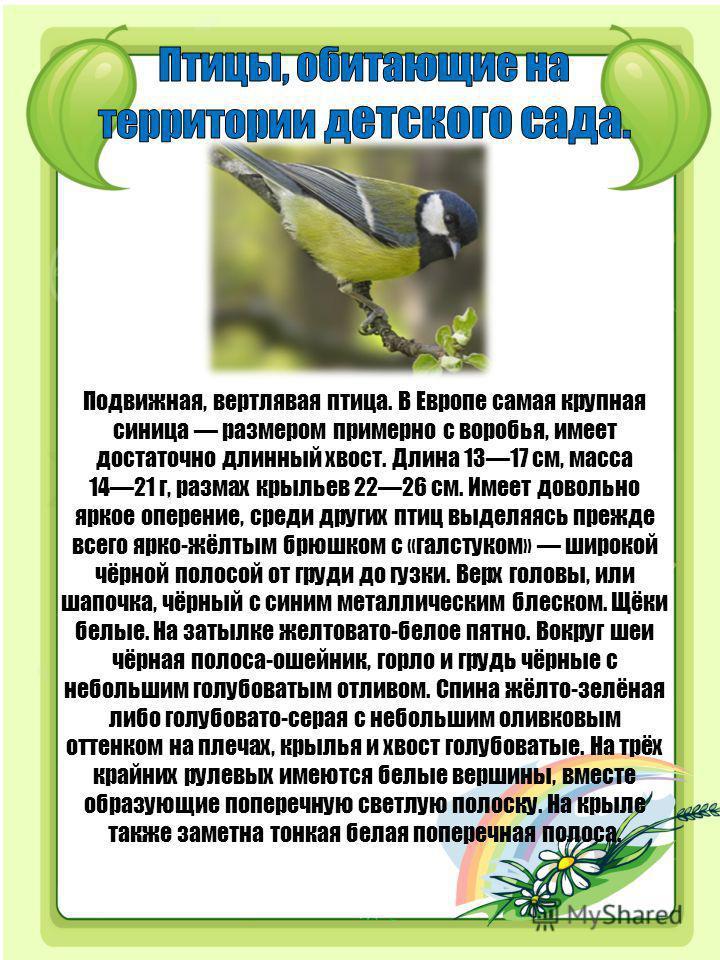 Подвижная, вертлявая птица. В Европе самая крупная синица размером примерно с воробья, имеет достаточно длинный хвост. Длина 1317 см, масса 1421 г, размах крыльев 2226 см. Имеет довольно яркое оперение, среди других птиц выделяясь прежде всего ярко-ж