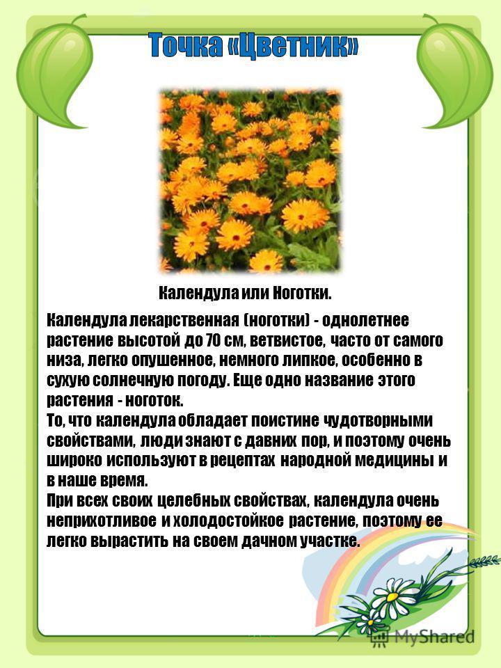 Календула или Ноготки. Календула лекарственная (ноготки) - однолетнее растение высотой до 70 см, ветвистое, часто от самого низа, легко опушенное, немного липкое, особенно в сухую солнечную погоду. Еще одно название этого растения - ноготок. То, что