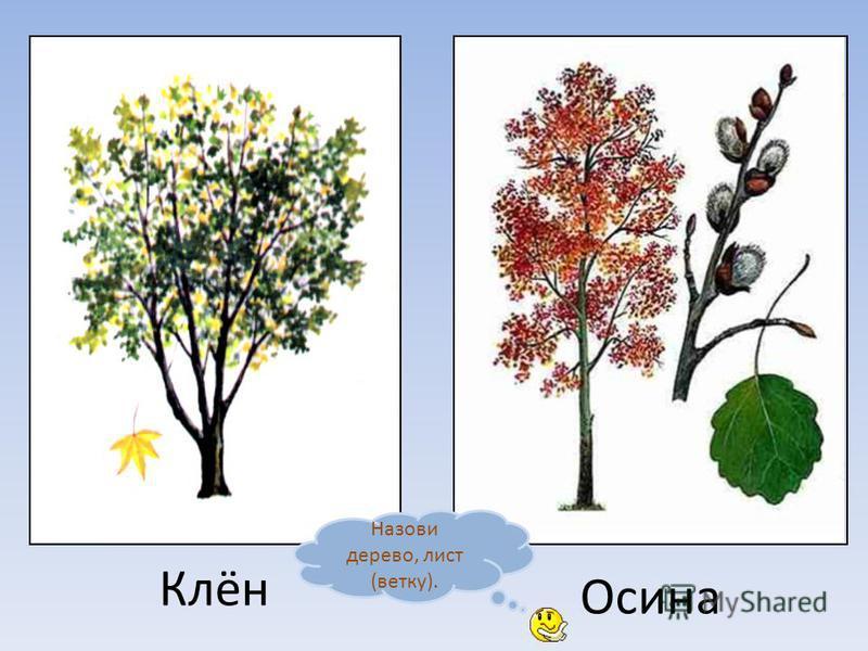 Дуб Каштан Назови дерево, лист (ветку).