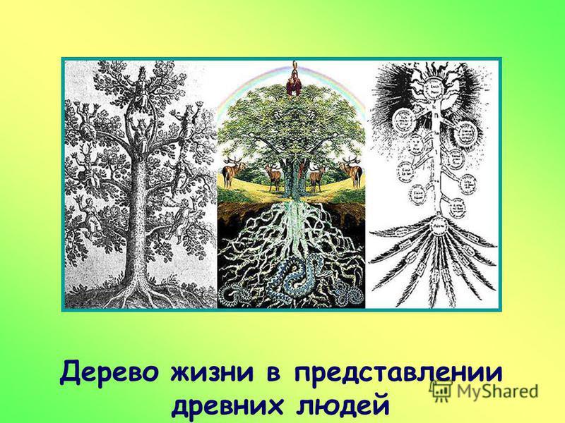Дерево жизни в представлении древних людей р