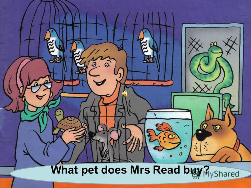 Lets go to the pet shop