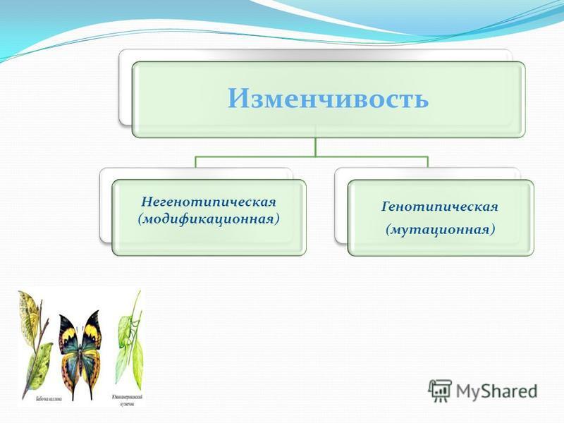 Изменчивость Генотипическая (мутационная) Негенотипическая (модификационная)