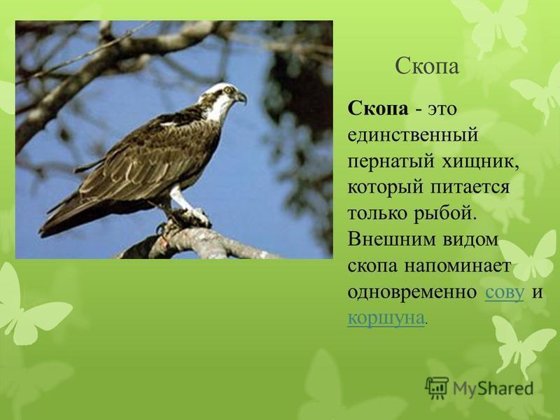 орлан крупная хищная птица семейства ястребиных, обитающая на территории Северной Америки Северной Америки.