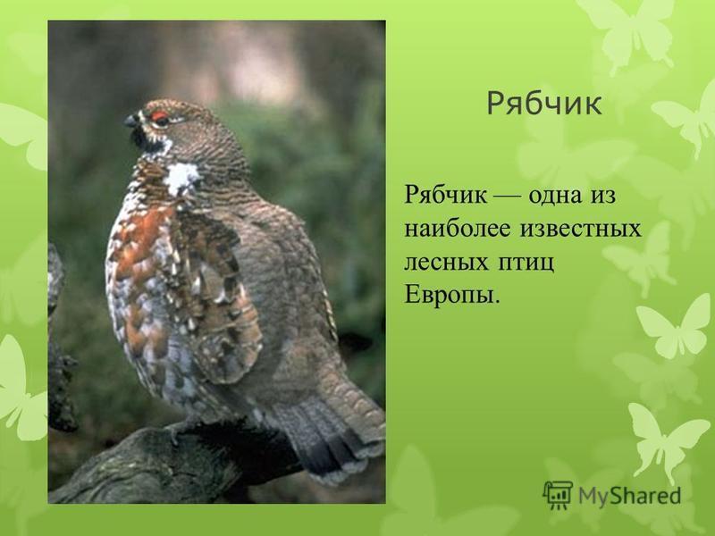 Скопа Скопа - это единственный пернатый хищник, который питается только рыбой. Внешним видом скопа напоминает одновременно сову и коршуна.сову коршуна