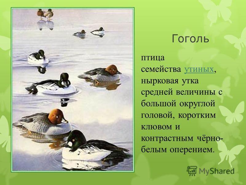 Рябчик Рябчик одна из наиболее известных лесных птиц Европы.