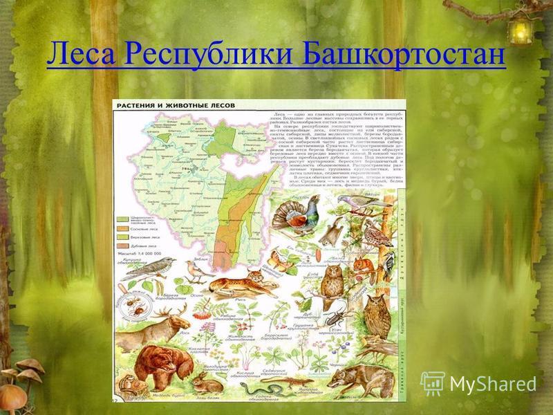 Леса Республики Башкортостан