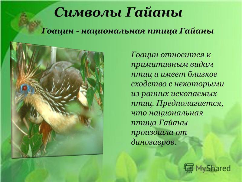 Символы Гайаны Гоацин относится к примитивным видам птиц и имеет близкое сходство с некоторыми из ранних ископаемых птиц. Предполагается, что национальная птица Гайаны произошла от динозавров. Гоацин - национальная птица Гайаны