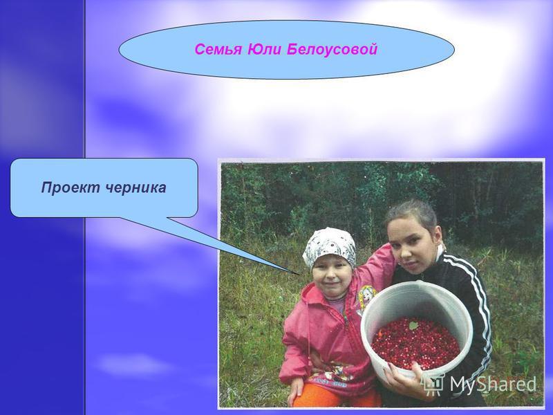 Семья Юли Белоусовой Проект черника