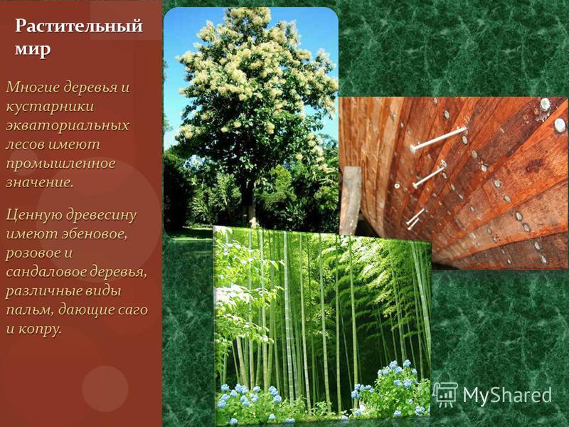 Многие деревья и кустарники экваториальных лесов имеют промышленное значение. Ценную древесину имеют эбеновое, розовое и сандаловое деревья, различные виды пальм, дающие саго и копру. Растительный мир