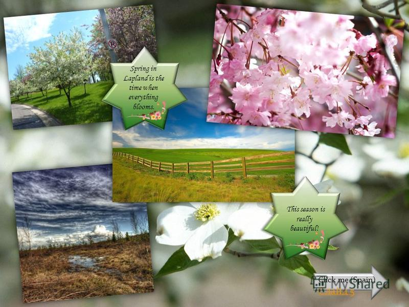 Spring in Lapland is the time when everything blooms. This season is really beautiful! Click me (Spain) Слайд 5
