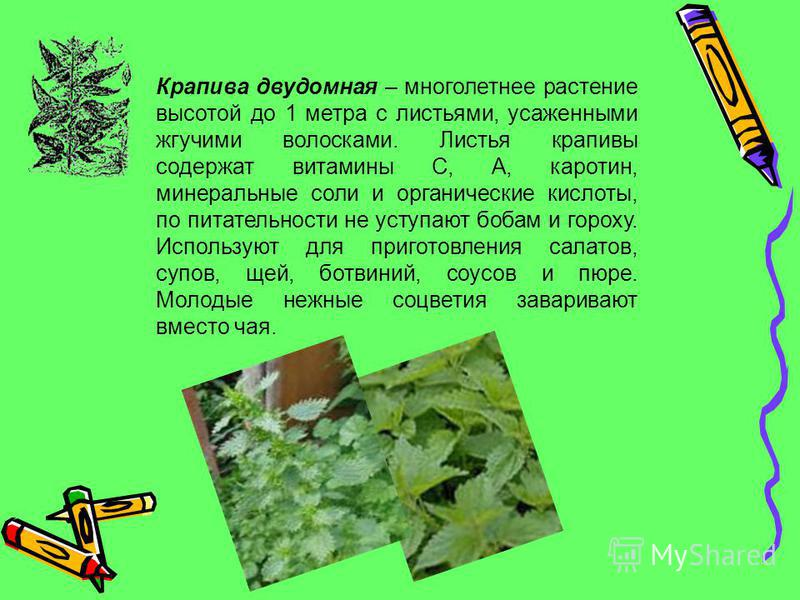 Одуванчик лекарственный – растет на лугах, в полях и садах, около дорог. Цветет в апреле–мае. Листья одуванчика содержат витамины C и E, каротин, легкоусвояемые соли фосфора, углеводы и другие полезные вещества. В пищу используют почти все растение.