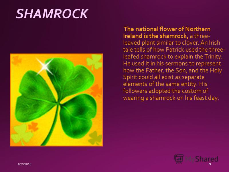 SHAMROCK The national flower of Northern Ireland is the shamrock, a three- leaved plant similar to clover. An Irish tale tells of how Patrick used the three- leafed shamrock to explain the Trinity. He used it in his sermons to represent how the Fathe