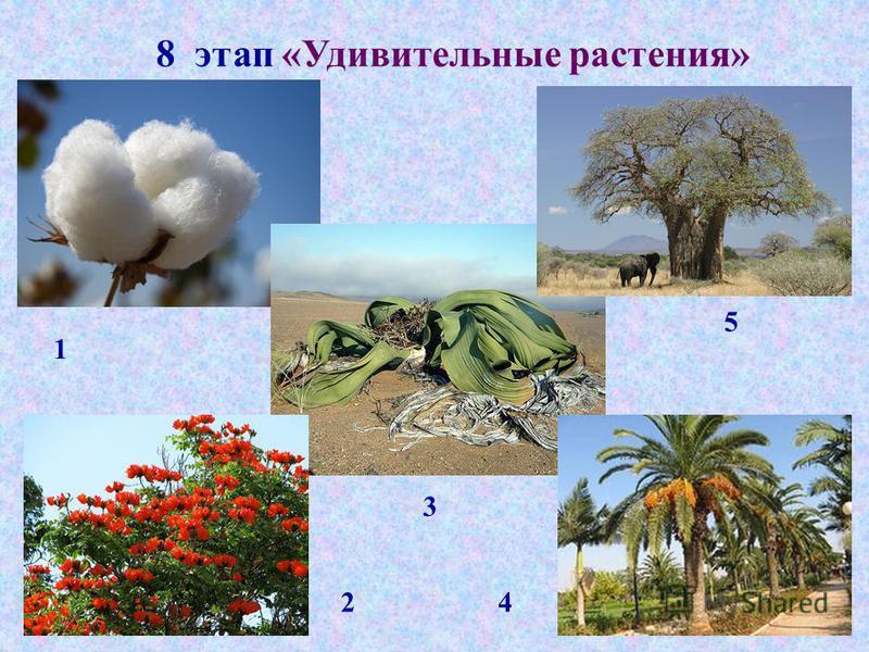 8 этап «Удивительные растения» 1 2 3 4 5