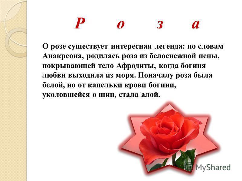Р о з а О розе существует интересная легенда: по словам Анакреона, родилась роза из белоснежной пены, покрывающей тело Афродиты, когда богиня любви выходила из моря. Поначалу роза была белой, но от капельки крови богини, уколовшейся о шип, стала алой