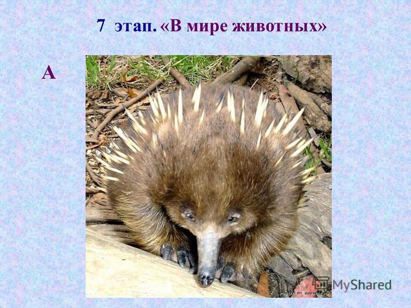 7 этап. «В мире животных» А