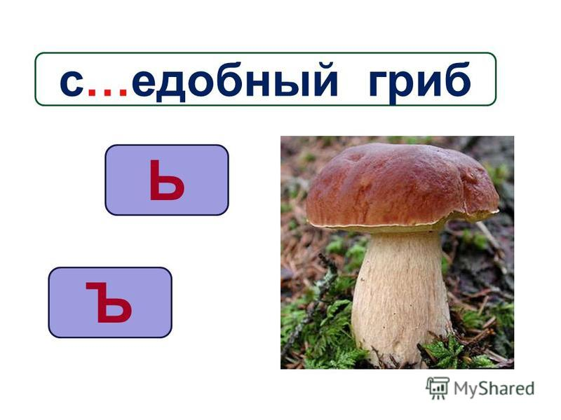 Ъ Ь с…съедобный гриб