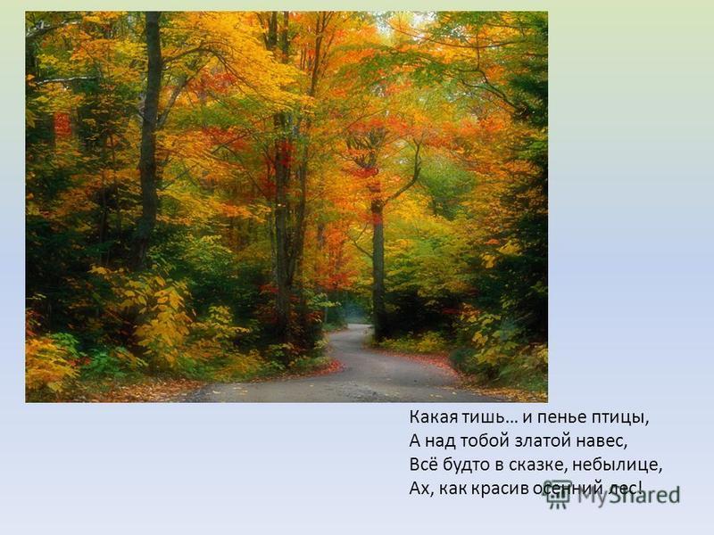 Какая тишь… и пенье птицы, А над тобой златой навес, Всё будто в сказке, небылице, Ах, как красив осенний лес!