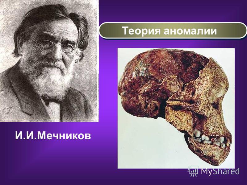 И.И.Мечников Теория аномалии