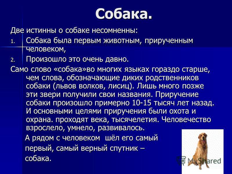 Собака. Собака. Две истинны о собаке несомненны: 1. Собака была первым животным, прирученным человеком, 2. Произошло это очень давно. Само слово «собака»во многих языках гораздо старше, чем слова, обозначающие диких родственников собаки (львов волков
