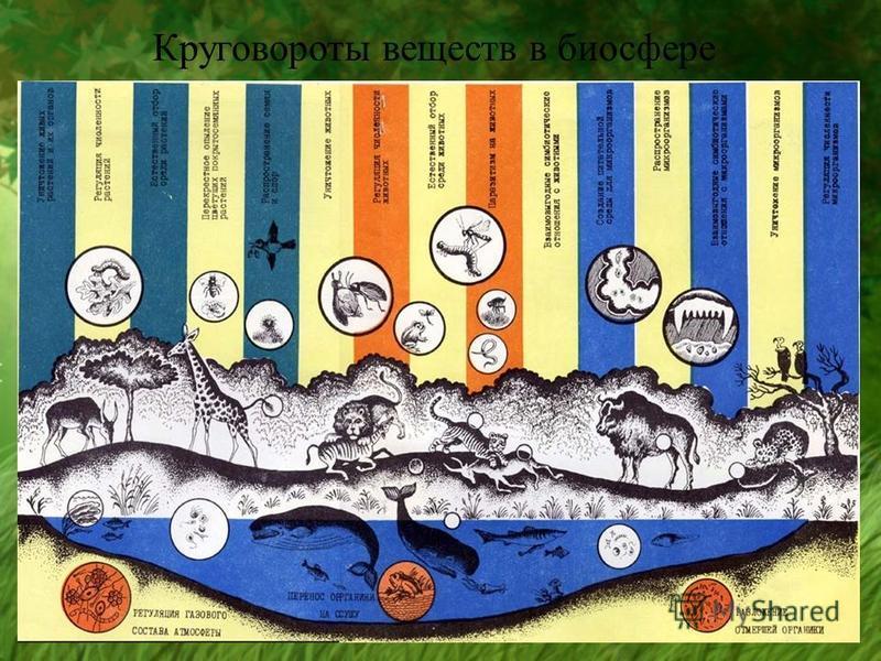 Круговороты веществ в биосфере