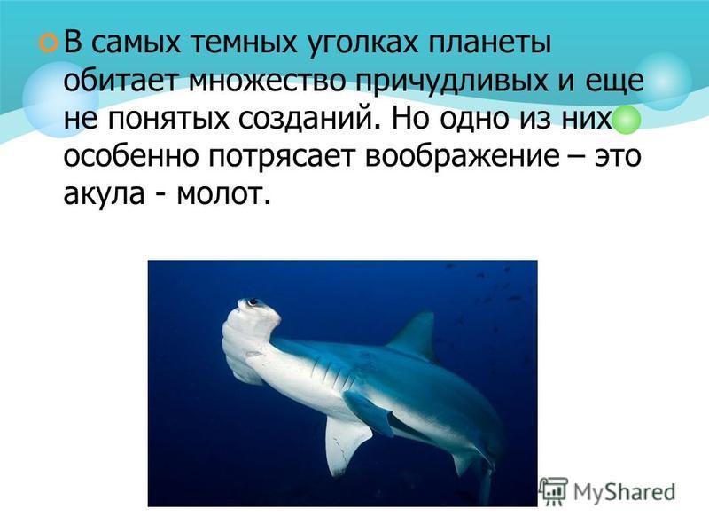 В самых темных уголках планеты обитает множество причудливых и еще не понятых созданий. Но одно из них особенно потрясает воображение – это акула - молот.