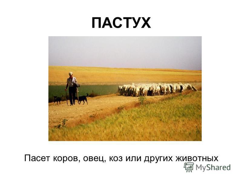 ПАСТУХ Пасет коров, овец, коз или других животных