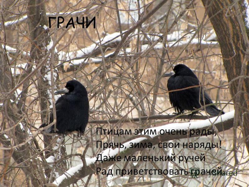 ГРАЧИ Птицам этим очень рады, Прячь, зима, свои наряды! Даже маленький ручей Рад приветствовать грачей.