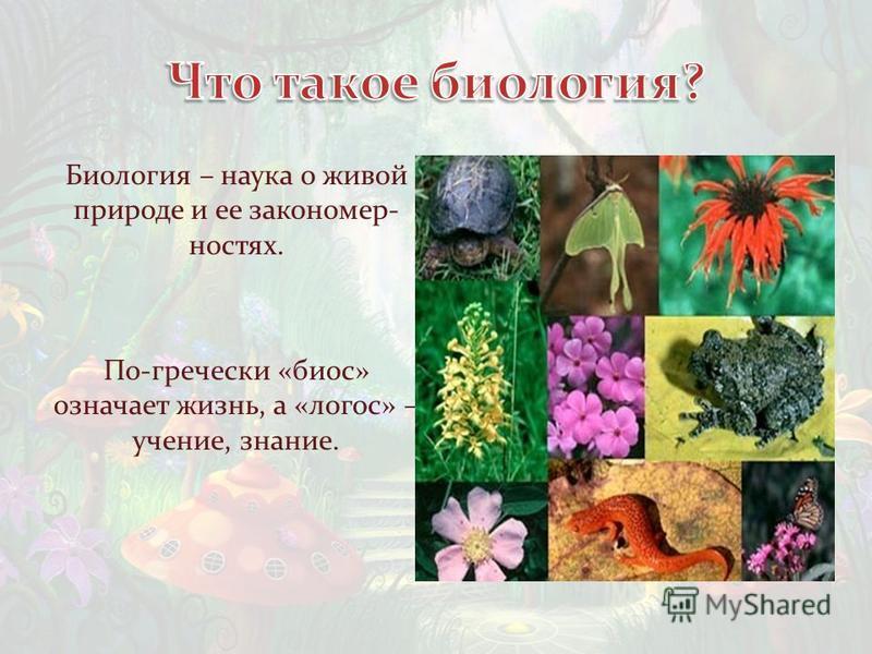 Биология – наука о живой природе и ее закономерностях. По-гречески «биос» означает жизнь, а «логос» – учение, знание.
