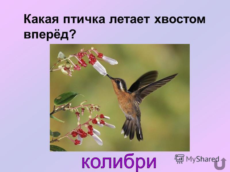 Какая птица вела календарь, а писатель В. Бианки перевёл его на человеческий язык?