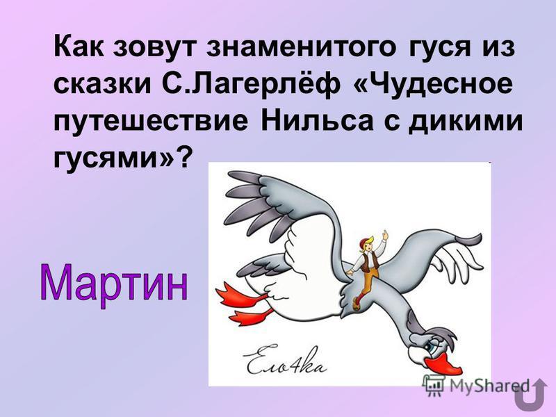 Какая птичка летает хвостом вперёд?