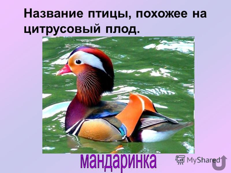 Как зовут знаменитого гуся из сказки С.Лагерлёф «Чудесное путешествие Нильса с дикими гусями»?