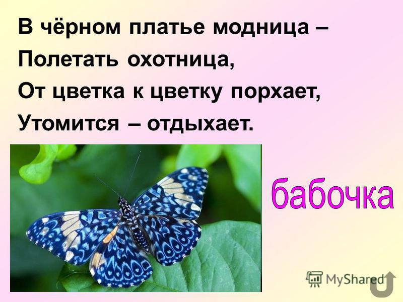 Назовите сказку К.Чуковского о насекомом, любившем пить чай.