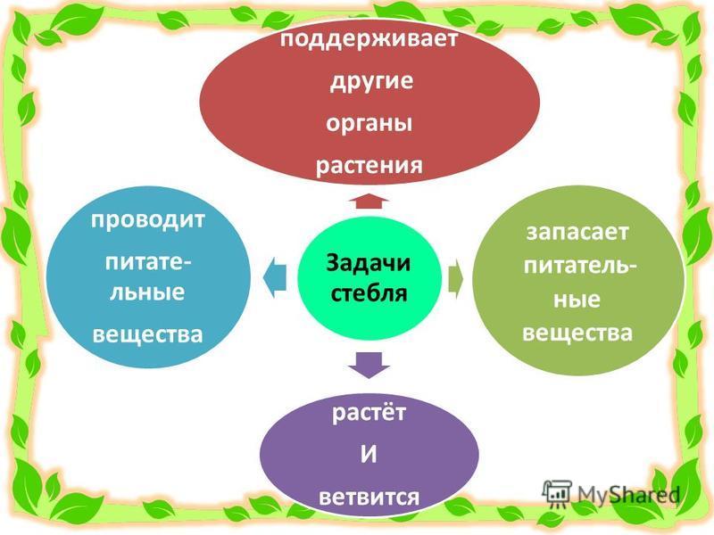 Задачи стебля поддерживает другие органы растения запасает питательные вещества растёт И ветвится проводит питательные вещества