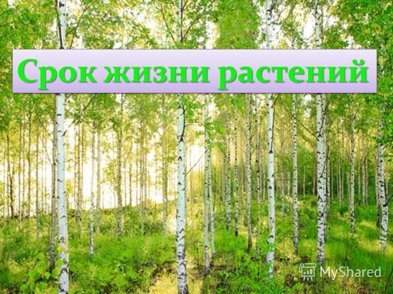 Срок жизни растений
