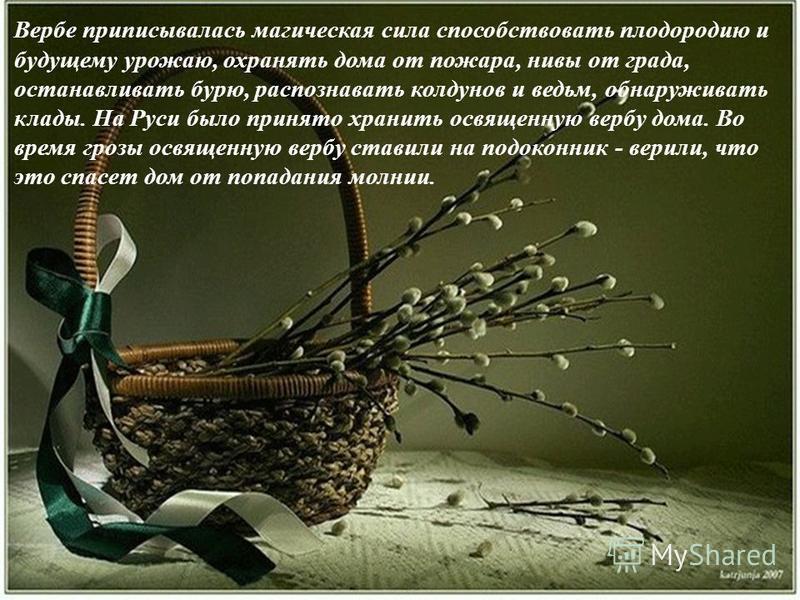Вербе приписывалась магическая сила способствовать плодородию и будущему урожаю, охранять дома от пожара, нивы от града, останавливать бурю, распознавать колдунов и ведьм, обнаруживать клады. На Руси было принято хранить освященную вербу дома. Во вре