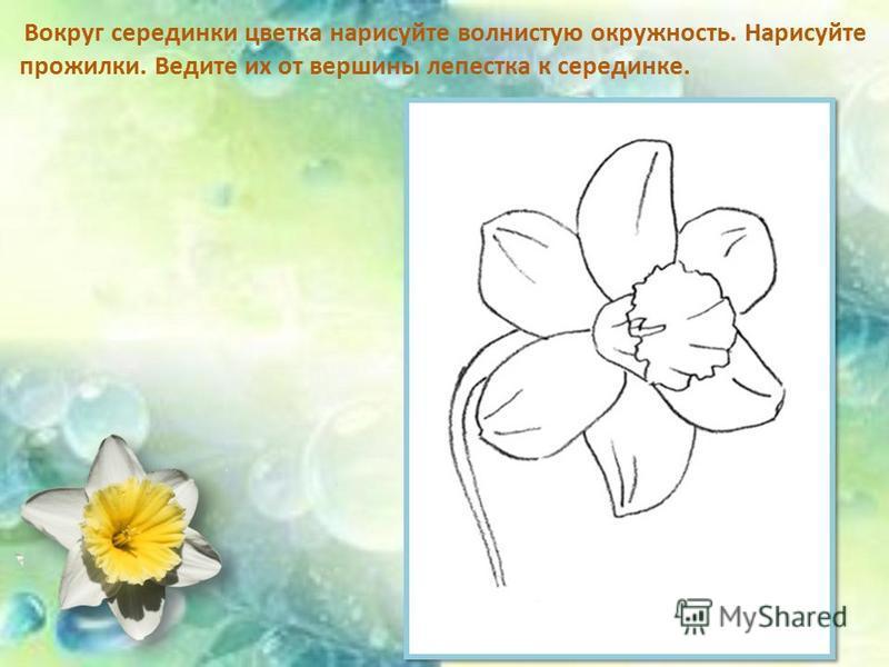 Вокруг серединки цветка нарисуйте волнистую окружность. Нарисуйте прожилки. Ведите их от вершины лепестка к серединке.