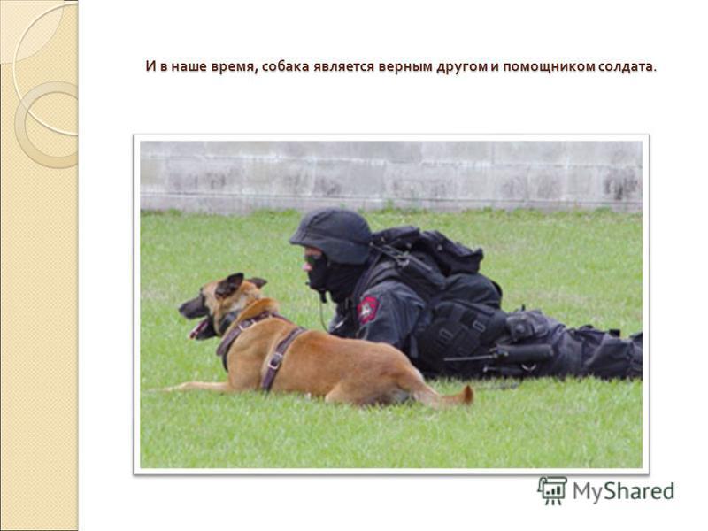 И в наше время, собака является верным другом и помощником солдата.