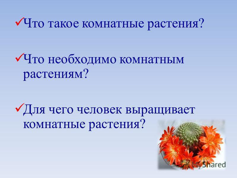 Что такое комнатные растения? Что необходимо комнатным растениям? Для чего человек выращивает комнатные растения?