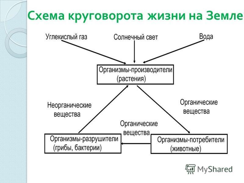 Схема круговорота жизни на Земле