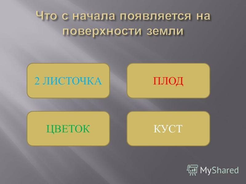 КУСТ ПЛОД2 ЛИСТОЧКА ЦВЕТОК