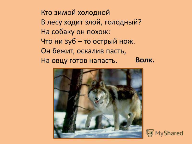 Кто зимой холодной В лесу ходит злой, голодный? На собаку он похож: Что ни зуб – то острый нож. Он бежит, оскалив пасть, На овцу готов напасть. Волк.