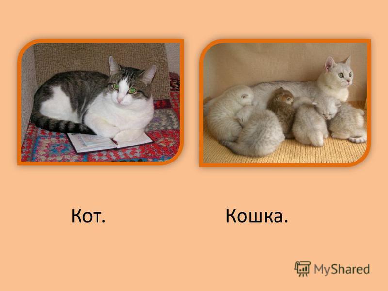 Кот.Кошка.