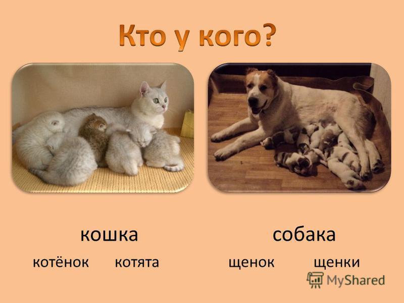кошка котёноккотятащенкищенок собака