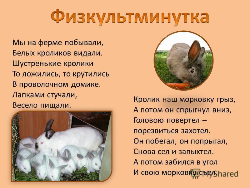 Мы на ферме побывали, Белых кроликов видали. Шустренькие кролики То ложились, то крутились В проволочном домике. Лапками стучали, Весело пищали. Кролик наш морковку грыз, А потом он спрыгнул вниз, Головою повертел – порезвиться захотел. Он побегал, о