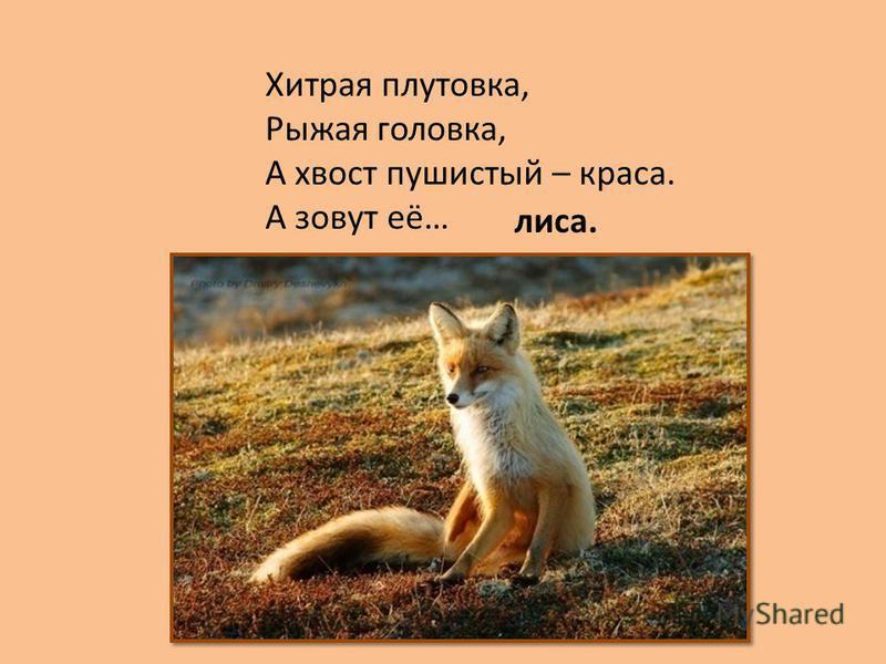 Хитрая плутовка, Рыжая головка, А хвост пушистый – краса. А зовут её… лиса.