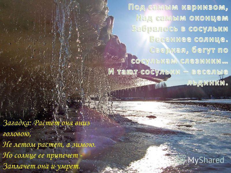 Загадка: Растет она вниз головою, Не летом растет, а зимою. Но солнце ее припечет - Заплачет она и умрет.